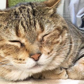 猫の写真・画像素材[2072819]