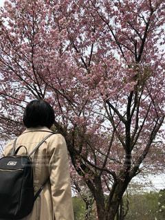 木の隣に立っている人の写真・画像素材[1151364]
