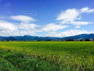 近くに緑豊かな緑のフィールドのの写真・画像素材[1151653]