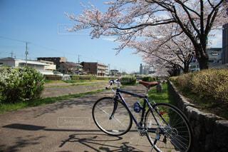 春のサイクリングの写真・画像素材[1152228]
