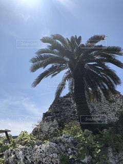 岩の上のヤシの木のグループの写真・画像素材[1230847]