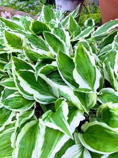 近くの緑の植物をの写真・画像素材[1153960]