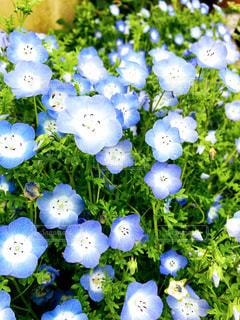 近くの花のアップの写真・画像素材[1153970]