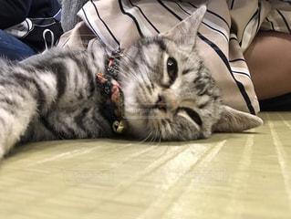 ベッドの上で横になっている猫の写真・画像素材[1167041]