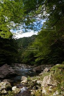 渓谷の自然の写真・画像素材[1153583]