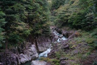 渓谷と自然の写真・画像素材[1153584]