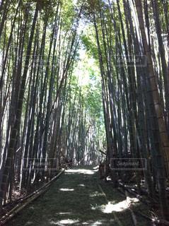 竹林の道の写真・画像素材[1155138]