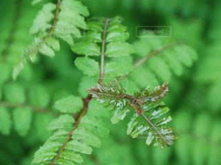 木の芽の写真・画像素材[1155143]