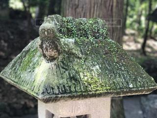 石燈籠の梟の写真・画像素材[1155214]