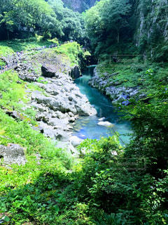 渓流の写真・画像素材[1155215]