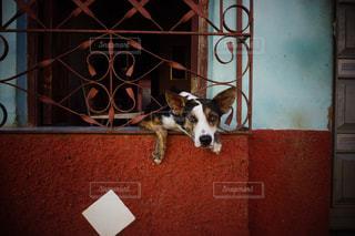 キューバの町の片隅で。の写真・画像素材[1153891]