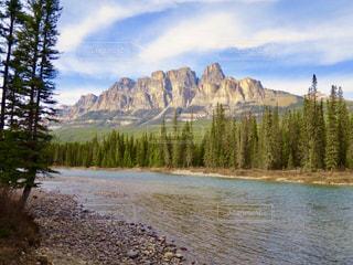 森を流れる川の写真・画像素材[1154284]