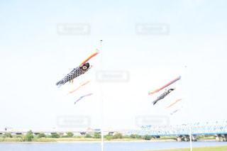 元気な鯉のぼりの写真・画像素材[1160580]