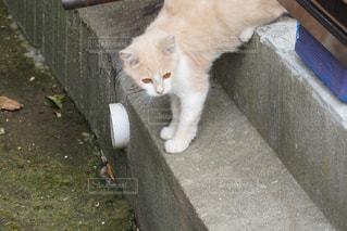 佐久島のネコちゃんの写真・画像素材[1164613]