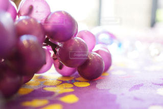 葡萄の写真・画像素材[1254303]