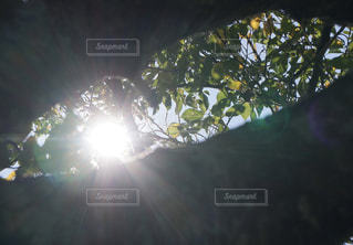 木漏れ日の写真・画像素材[2458686]