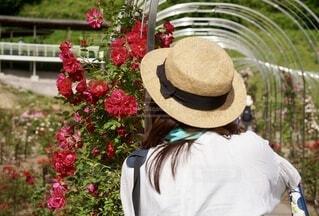 花を撮るの写真・画像素材[4749614]