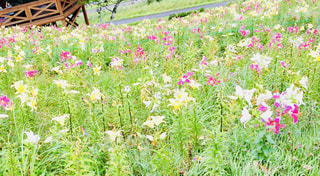 旅の思い出 花と緑のガーデンの写真・画像素材[1155430]