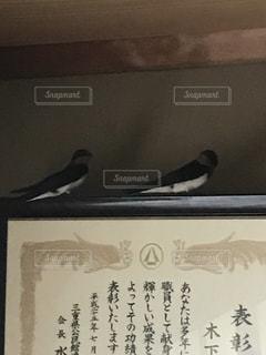 ツバメ夫婦の写真・画像素材[1165445]