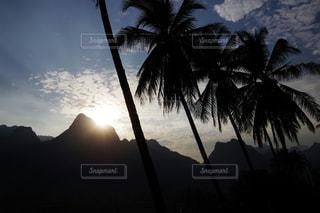 ヤシの木の横にある水の体に沈む夕日の写真・画像素材[1163713]
