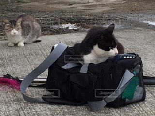 猫三昧の写真・画像素材[37528]
