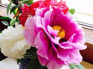 近くの花のアップの写真・画像素材[1160806]