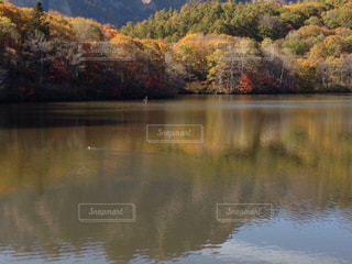 紅葉の鏡池の写真・画像素材[1615646]