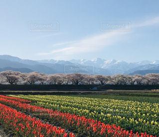 春の四重奏の写真・画像素材[2047483]