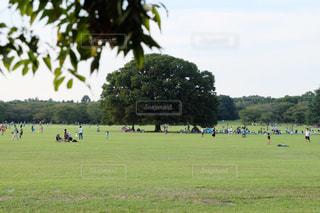 大きな木のある公園の写真・画像素材[1171788]