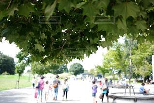 公園に向かう家族連れの写真・画像素材[1234126]