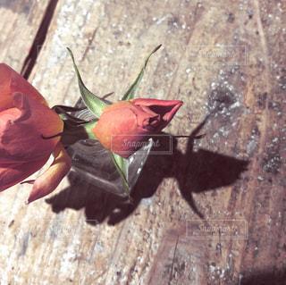 朱色の薔薇の写真・画像素材[1401118]