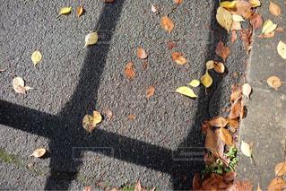 足元に広がる落ち葉の写真・画像素材[1532130]
