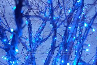 青いライトアップの写真・画像素材[1620035]