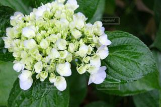 花のクローズアップの写真・画像素材[2202546]