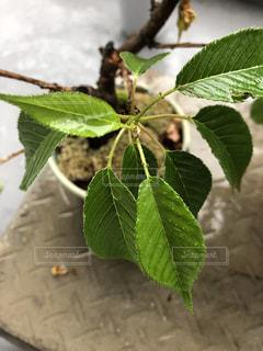 近くの緑の植物をの写真・画像素材[1157310]