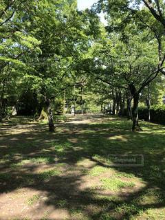 公園の木の写真・画像素材[1172402]