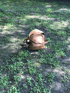 草の中に座って緑消火栓 - No.1173769