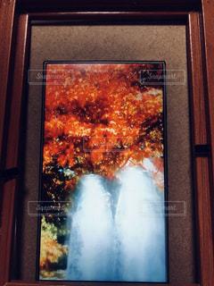 色彩豊かな秋の写真・画像素材[1450590]