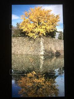 秋深まるイチョウの写真・画像素材[1454507]