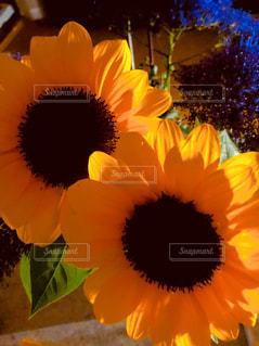 近くの花のアップの写真・画像素材[1458966]