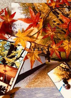 思い出の秋の写真・画像素材[1463637]