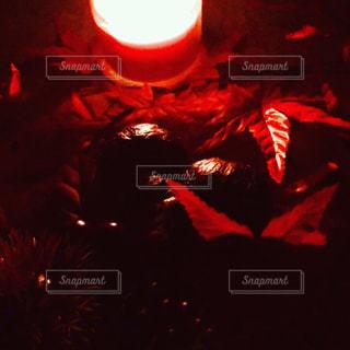 秋の夜長灯火楽しむの写真・画像素材[1463641]