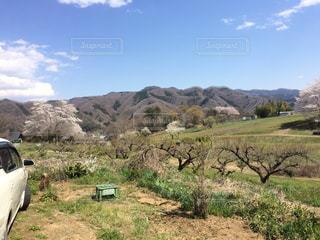 長瀞周辺の桜の写真・画像素材[1183250]