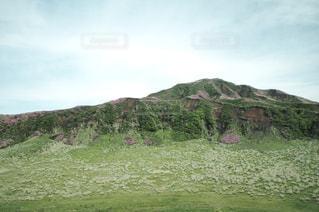 満開のミヤマキリシマの写真・画像素材[1198908]