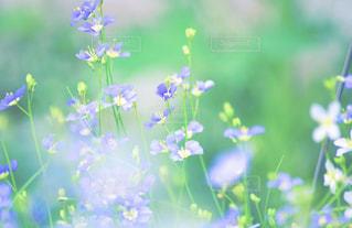近くの花のアップの写真・画像素材[1157917]