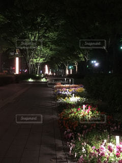 神戸の夜景(フラワーロード)の写真・画像素材[1158844]