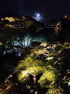 夜景 - No.1159941