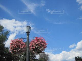 空と花の写真・画像素材[1160003]