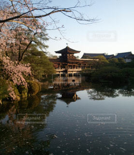 春の平安神宮の写真・画像素材[1162747]