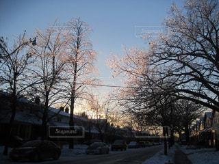 スノーストームで表面が凍った樹木の写真・画像素材[1162762]